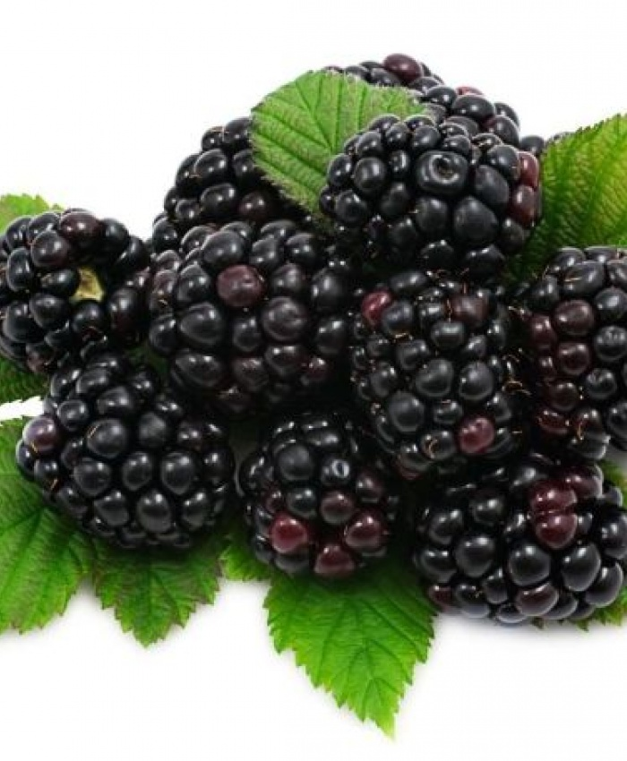 Blackberry
