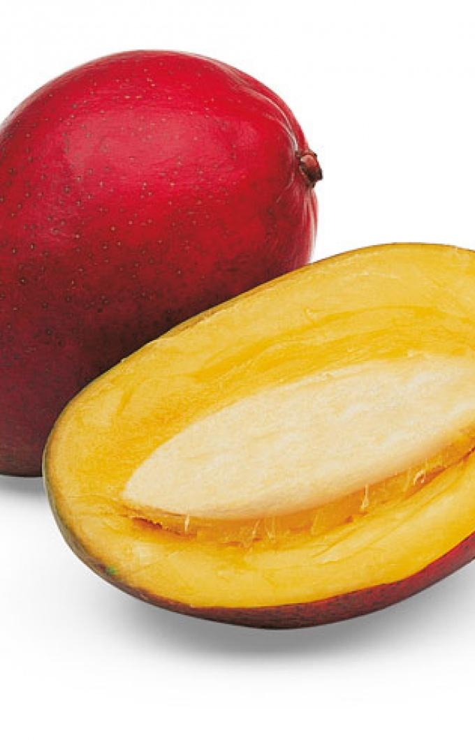 Mango 492